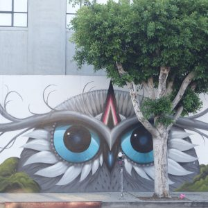 Big-eyed owl Jeff Soto