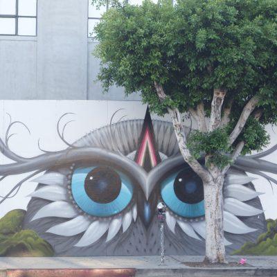 Big-eyed owl Jeff Soto